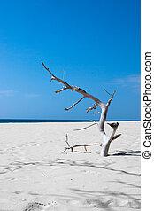 kék, holt, háttér., bitófák, tenger, tengerpart