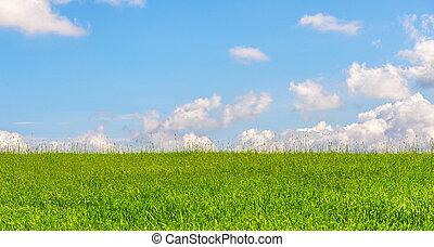 kék, nyár, búza, ég terep, zöld, közben