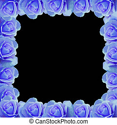 kék, rózsa, vektor, határ