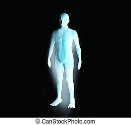 kék, system., wireframe, ábra, anatómia, erős, emberi, hologram., hím, 3