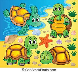 kép, noha, tengeri teknős, téma, 2