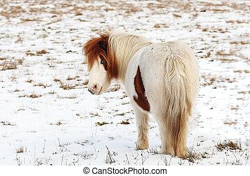 képben látható, egy, hideg, tél, nap, alatt, gyönyörű, ló legel