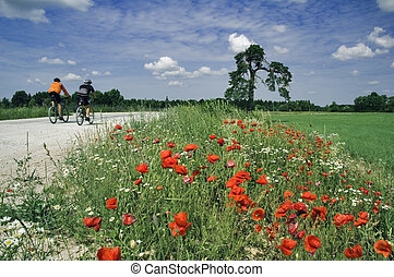 képzés, közül, biciklisták, képben látható, gyönyörű, út, noha, egy, virágzás, poppy., a, festői, sötét blue, ég, noha, clouds.