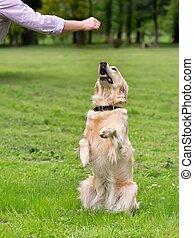 képzés, kutya