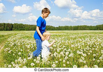 két gyerek, fiú, játék, képben látható, egy, nyár, kaszáló