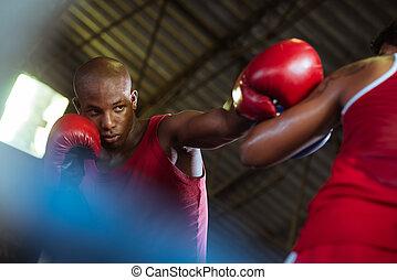 két, hím, atléta, verekszik, alatt, ökölvívás létrafok
