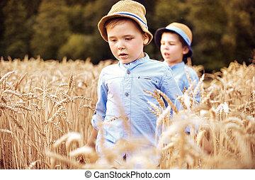 két, kevés, fivérek, gyalogló, közé, gabonanemű