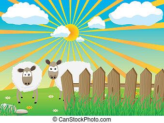 két, sheep
