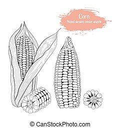 kéz, húzott, állhatatos, vektor, skicc, corn.