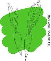kéz, húzott, carrots., szerves, eco, növényi, élelmiszer, background.vector, skicc, mód, illustration.