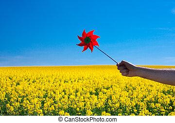 kéz, noha, fogaskerék, alatt, egy, mező, közül, sárga, elrabol, ellen, a, kék ég