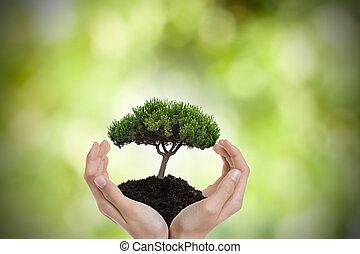 kézbesít, environmen, fa, oltalom, természet