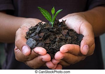 kézbesít, plant., birtok, fiatal