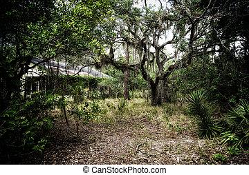 kísérteties, öreg, elhagyatott, saját, florida, erdő