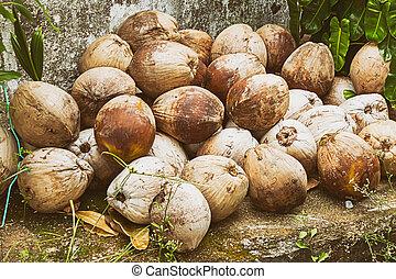 kókuszdió, út, cölöp, él, háttér, barna, nagy, vietnam