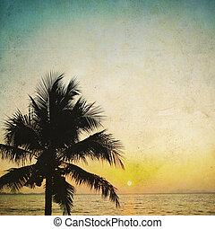 kókuszdió pálma fa, árnyalak, és, napkelte, alatt, szüret, háttér