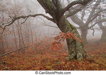 ködös erdő, alatt, ősz