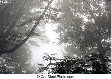 ködös, erdő