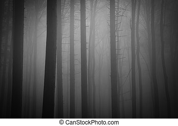 ködös erdő