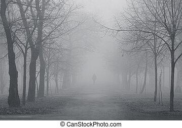 ködös, liget