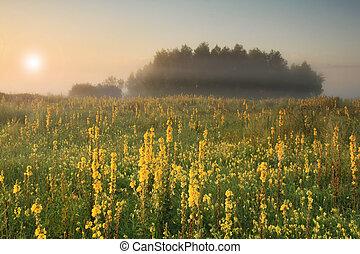 ködös, napkelte, képben látható, a, mező