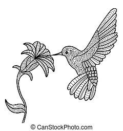 könyv, felnőttek, kolibri, színezés, vektor