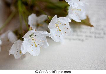 könyv, sakura