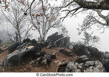körülvett, fekete, köd, szirt, kő