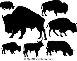 körvonal, közül, bulls.