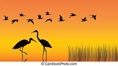 középső, gólyák, gyűjtőmedence