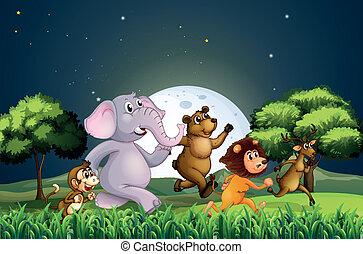 középső, gyalogló, állatok, éjszaka