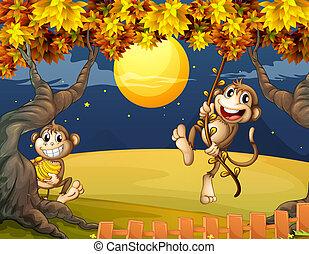 középső, majmok, két, csodálkozó, éjszaka