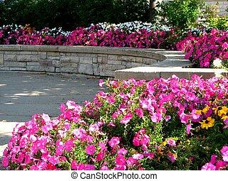 közönség, virág kert