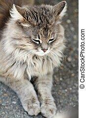 közelkép, portré, közül, macska