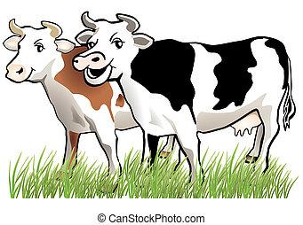 kühe, 2, glücklich