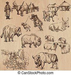 kühe, und, vieh, -, hand, gezeichnet, vektor, satz