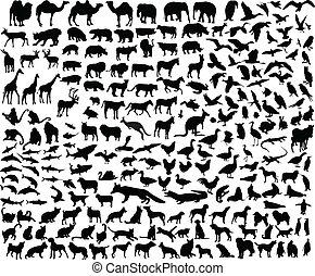 különböző, állat, gyűjtés, nagy
