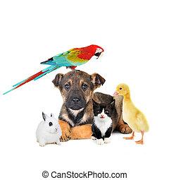 különböző, állatok