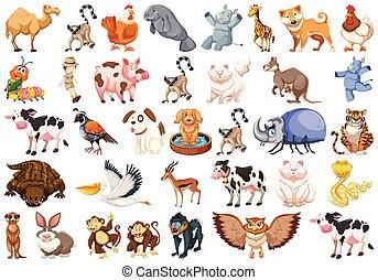 különböző, állhatatos, állatok