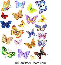 különböző, állhatatos, pillangók