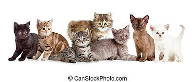 különböző, cica, vagy, korbácsok, csoport