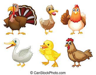 különböző, madarak, hat