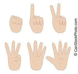 különböző, szám, állhatatos, kiállítás, kéz