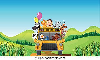 különféle, állatkert, állatok, autóbusz