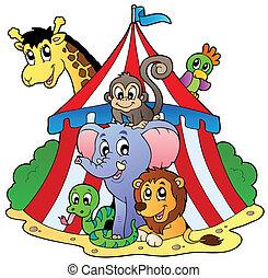 különféle, cirkusz, állatok, sátor