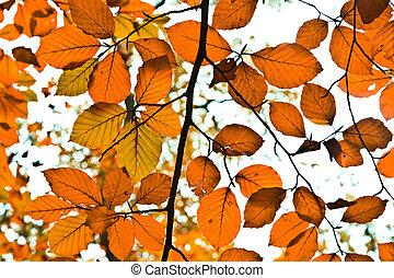 külső, háttér, leaves., ősz, csoport, narancs