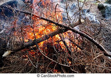 külső, tűzifa, kandalló, égető