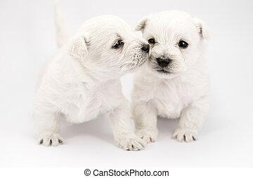 küssende , hundebabys