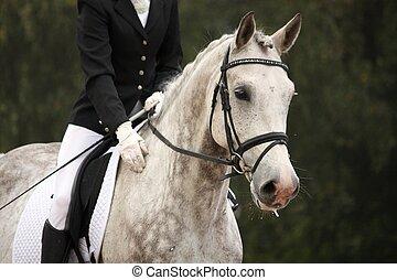 küzdőtér, szürke, ló látszik, ár, portré, sport