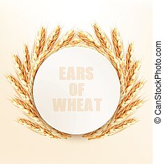 kłosie, wektor, wheat., illustration.